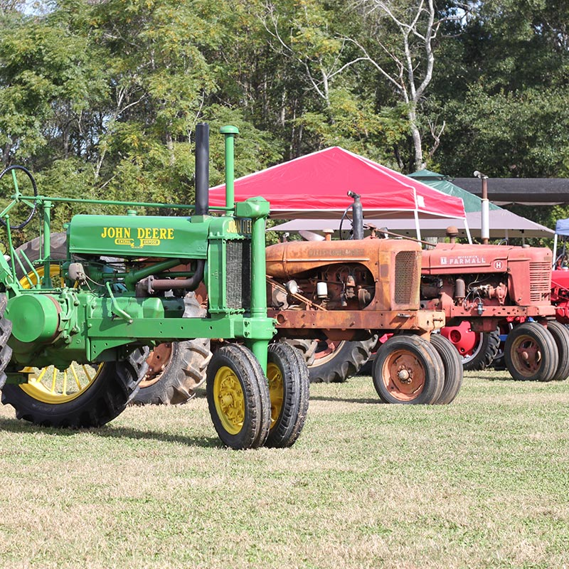 Christmas Tree Farms In North Georgia: Southern Belle Farm Is An Historic