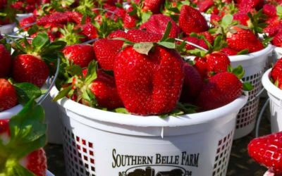 Southern Belle Farm Summer Recap – Thank You for Visiting!