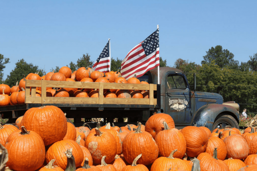 Southern Belle Pumpkins
