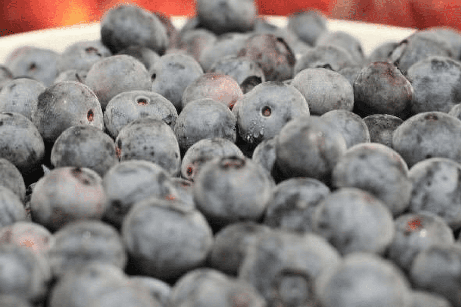 Southern Belle Farm Blueberries