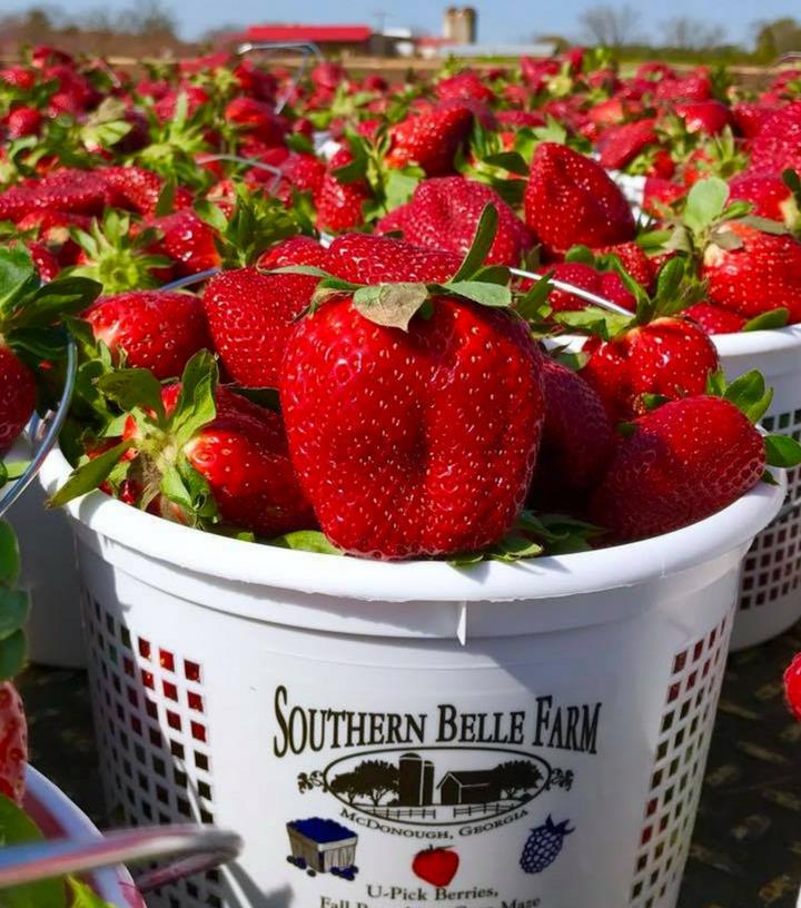 Southern Belle Farm Strawberries