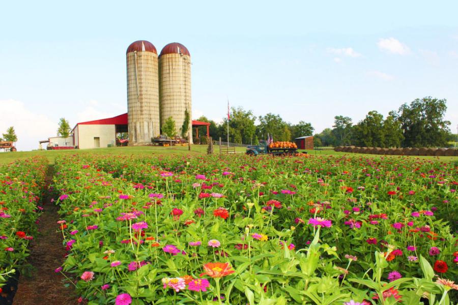 Fall On The Farm Southern Belle Farm