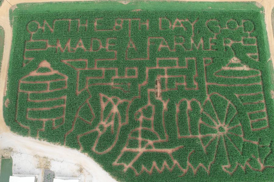 Southern Belle Corn Maze