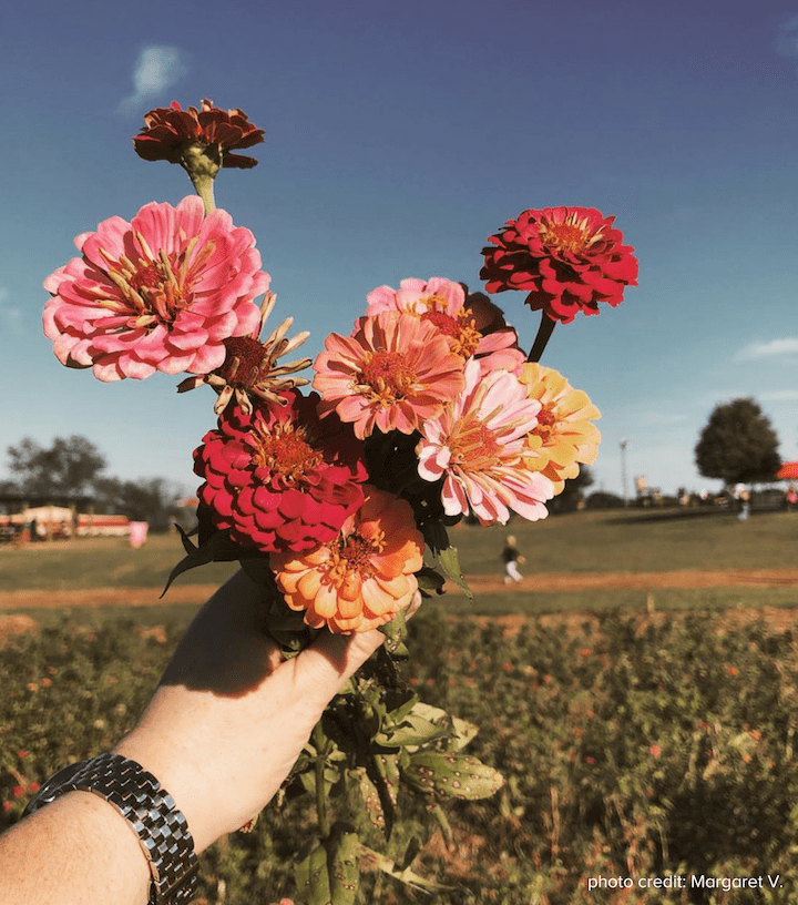 Flower Field photo credit Meg V.