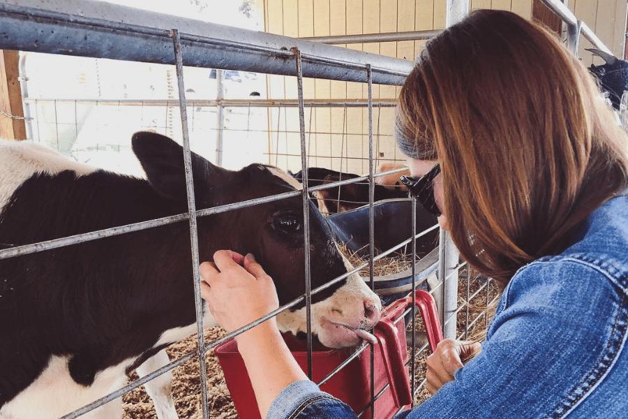 Southern Belle Blog Calf