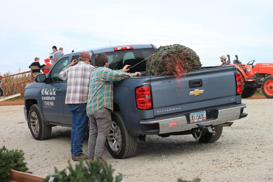 Southern Belle Farm Christmas Tree Farm
