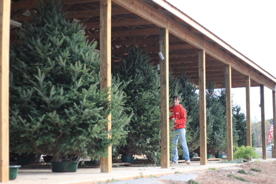 Southern Belle Farm Christmas Tree Farm