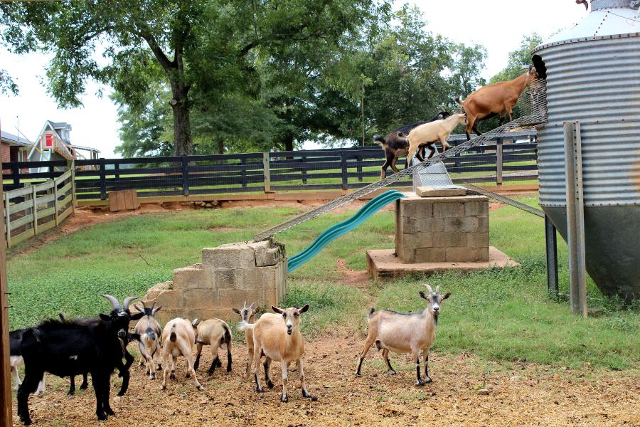 Southern Belle Belle's Barn