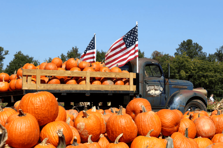 Don't Miss the Fall Fun at Southern Belle Farm!