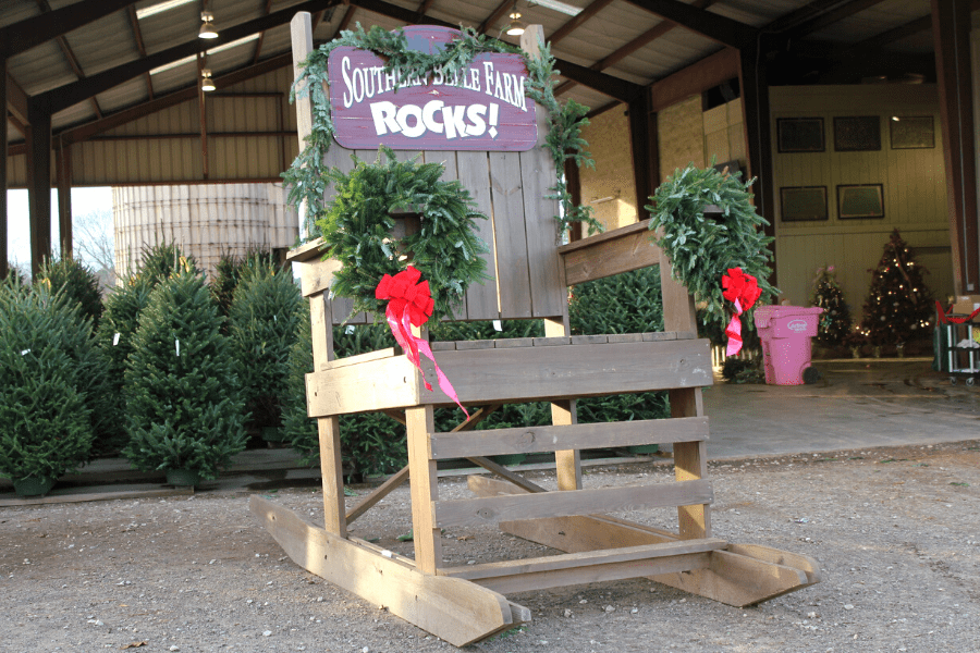 Christmas Trees and More Festive Fun at Southern Belle Farm