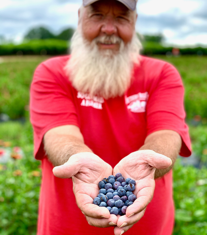 Man holding blueberries on a farm