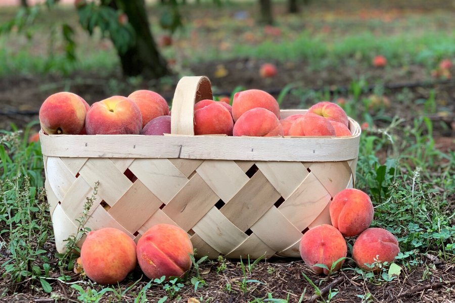 a basket of peaches