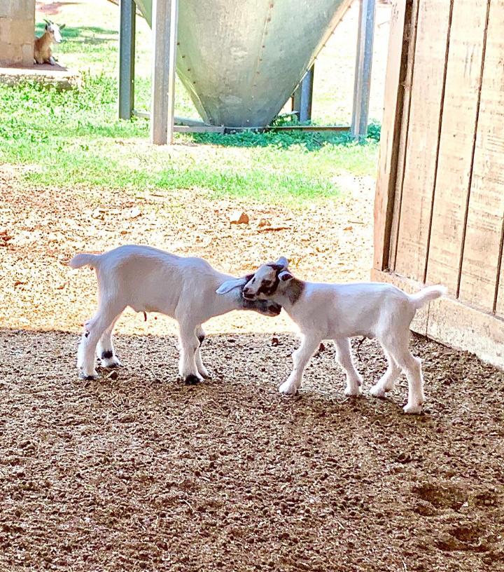 Southern Belle Farm Animal Barn