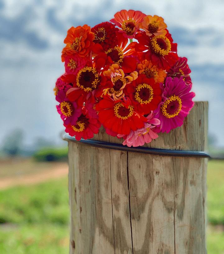 Southern Belle Farm Flowers
