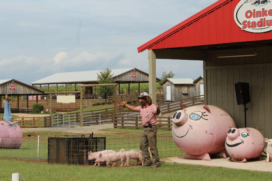 Southern Belle Farm Pig Races