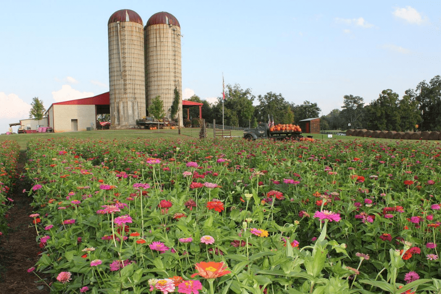 Southern Bell Farm Fall Season