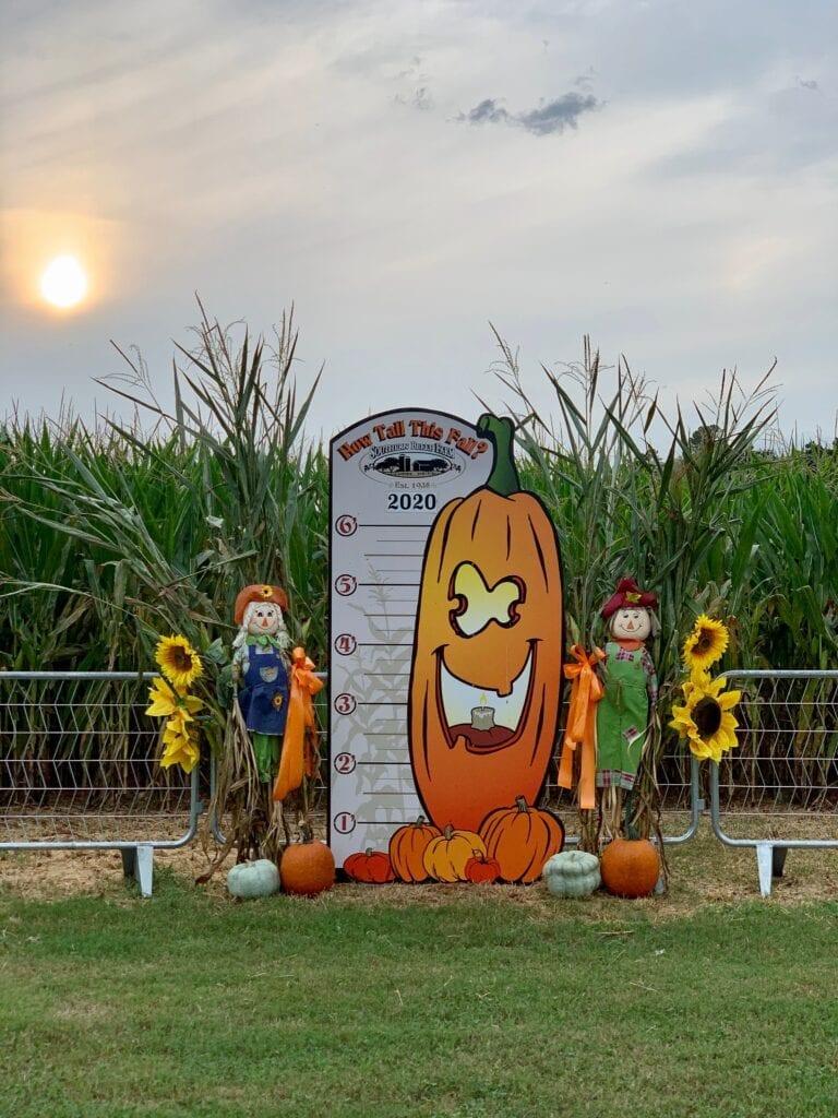 Fall Farm Corn Maze