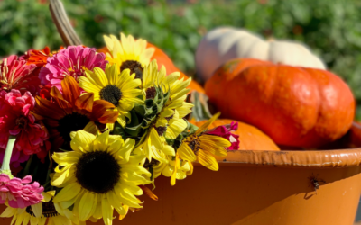 Fall Fun at Southern Belle Farm