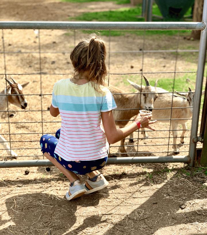 Southern Belle Farm Fall Animal Barn 1