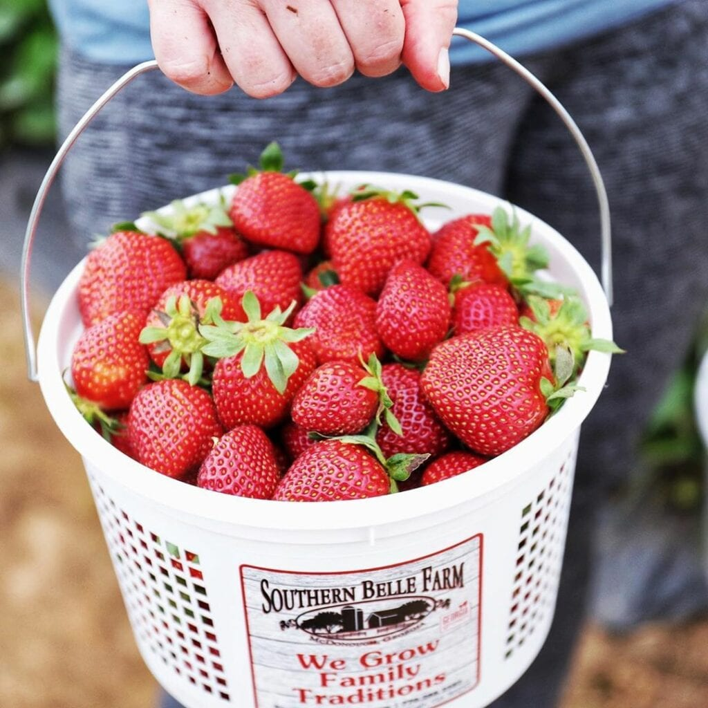 Woman holding a bucket of strawberries