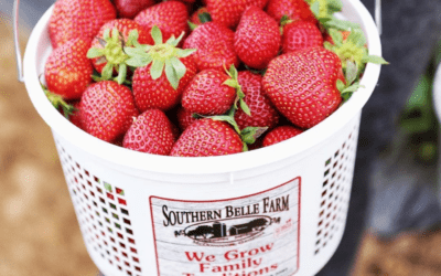 Enjoy the Sweetest Strawberries in the South This Spring!