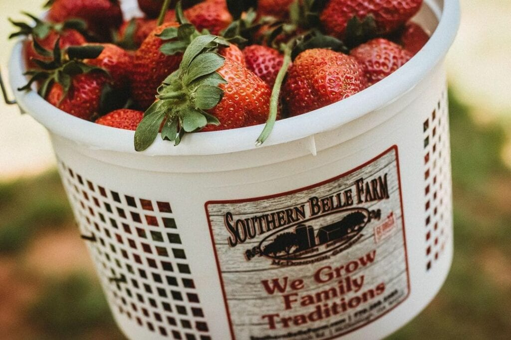 close up shot of a Southern Belle Farm Strawberry bucket