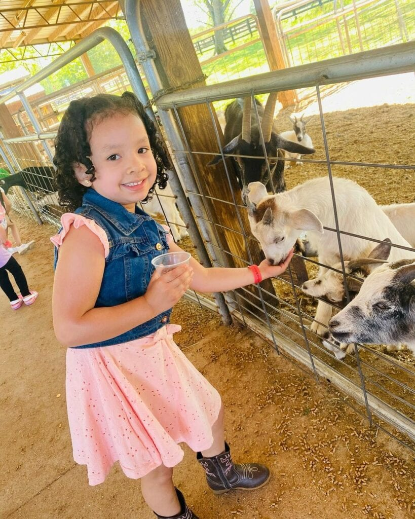 A girl feeding a goat