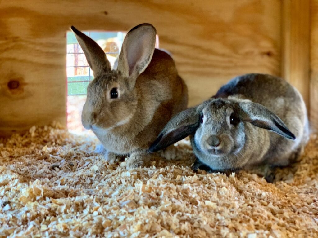 two bunnies in a rabbit house