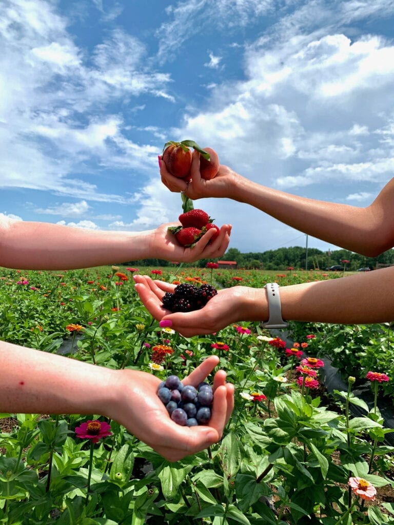 4 hands holding different summer fruits