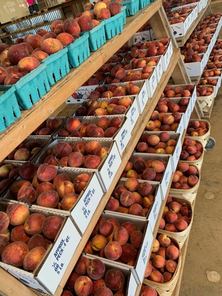 several bins of fresh peaches on shelves