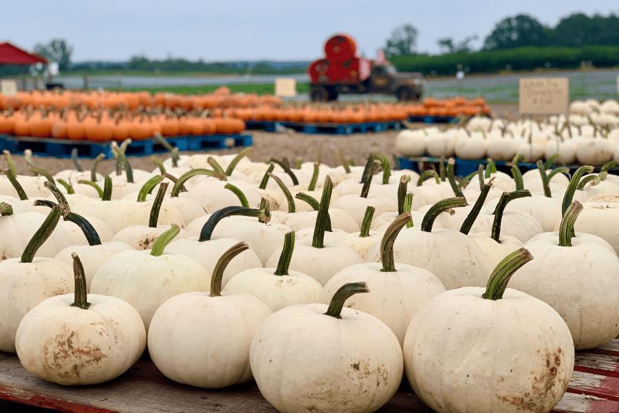 Coming Soon: Fall on the Farm!